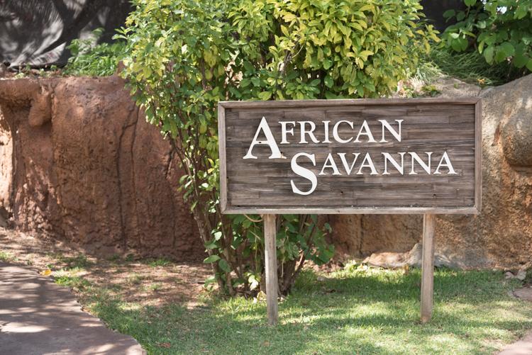 アフリカンサバンナ@ホノルル動物園
