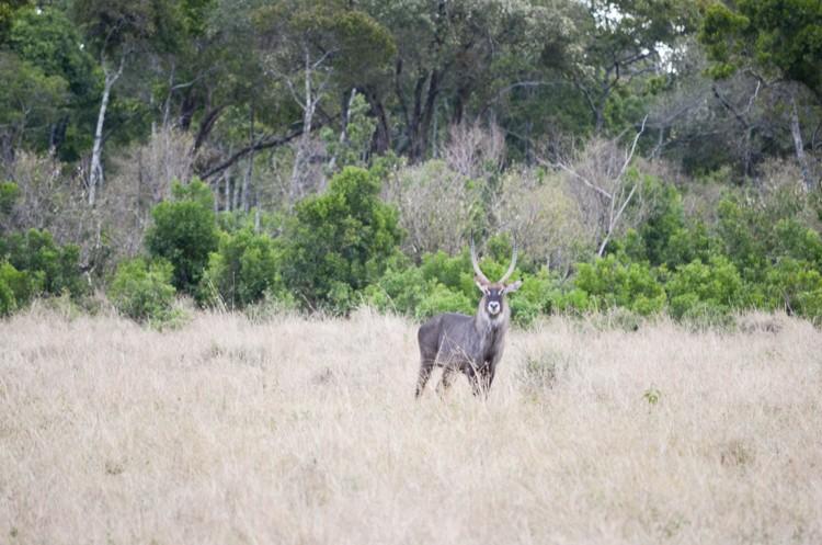 マサイマラの動物たち-24