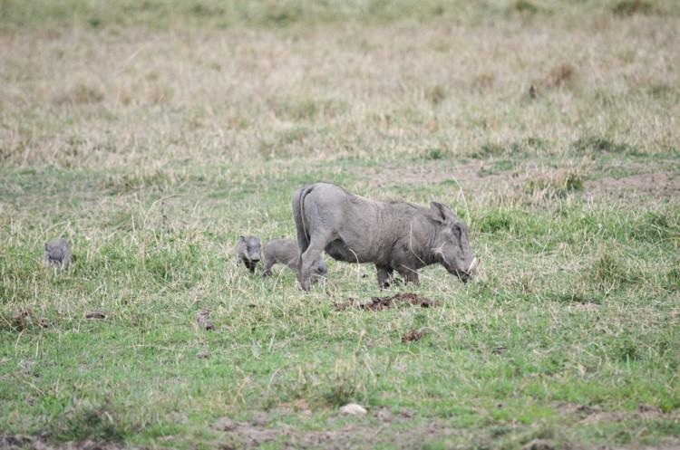 マサイマラの動物たち-11