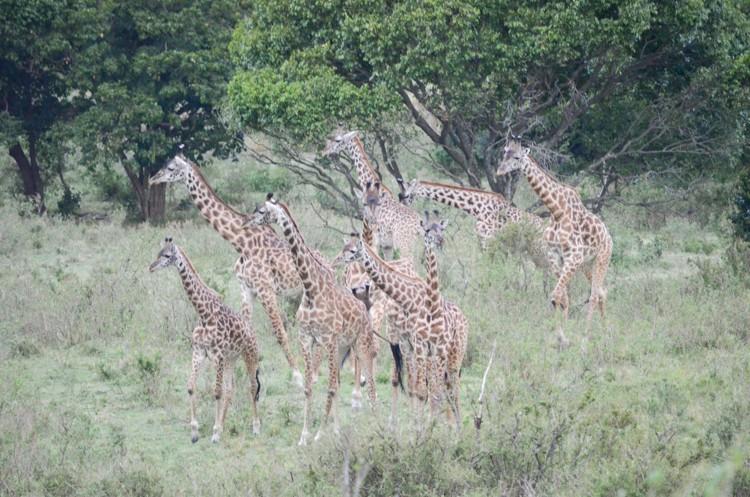 マサイマラの動物たち-25