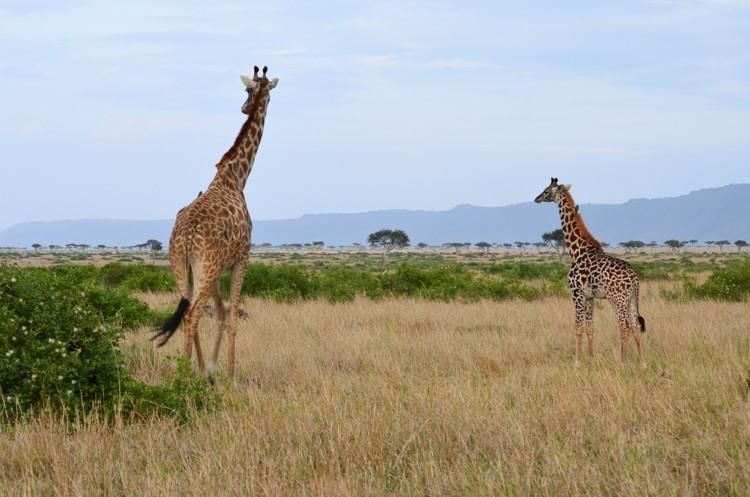 マサイマラの動物たち-26