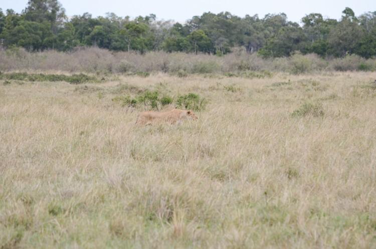 マサイマラの動物たち-15