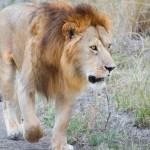 マサイマラの動物たち-17