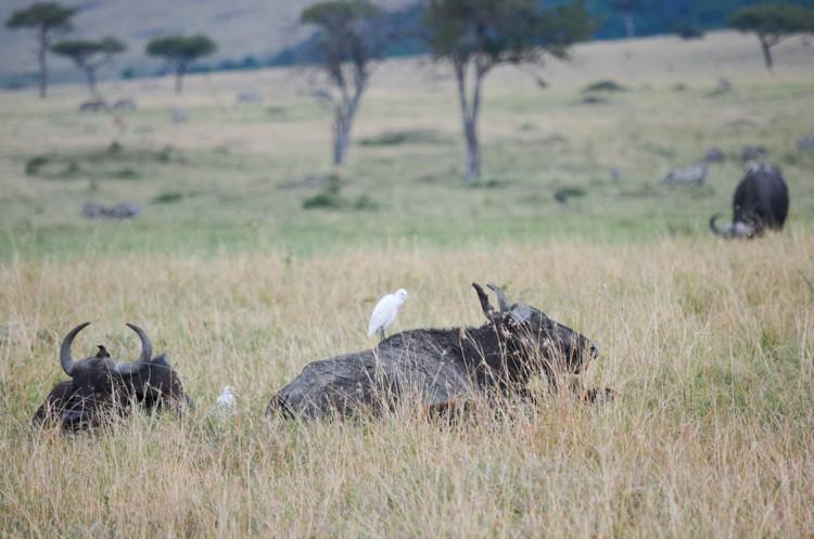 マサイマラの動物たち-9