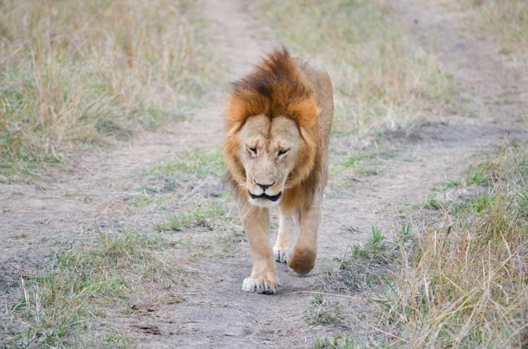マサイマラの動物たち-16