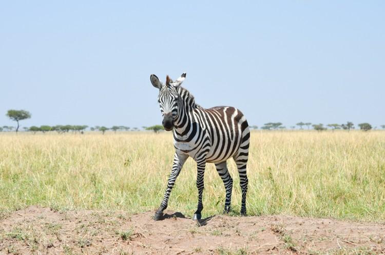マサイマラの動物たち-2