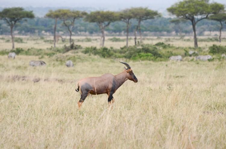マサイマラの動物たち-10