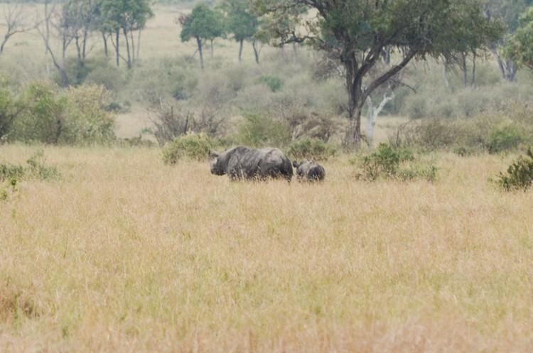 マサイマラの動物たち-19