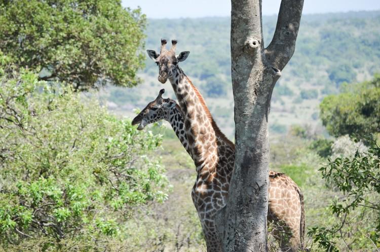 マサイマラの動物たち-5