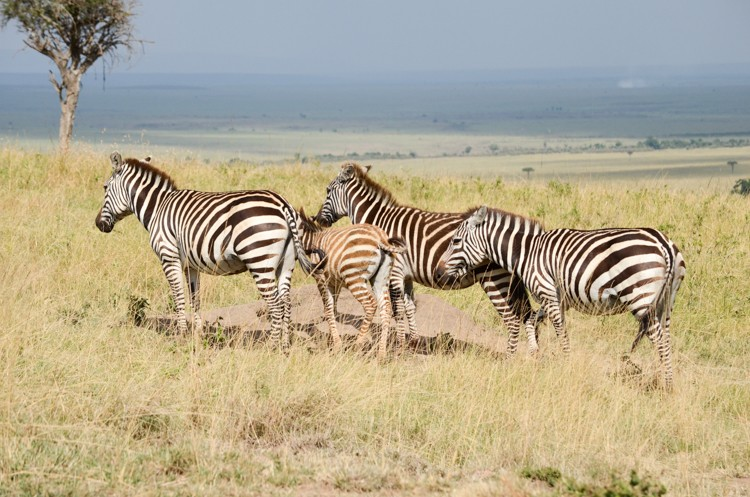 マサイマラの動物たち-8