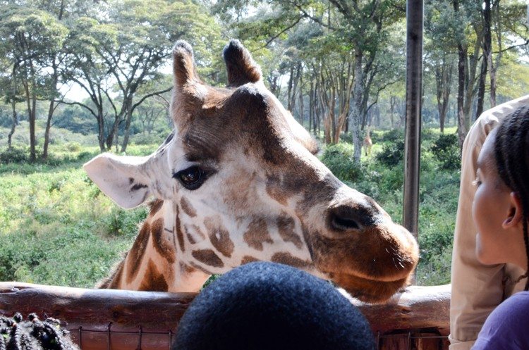 Giraffe Center-3