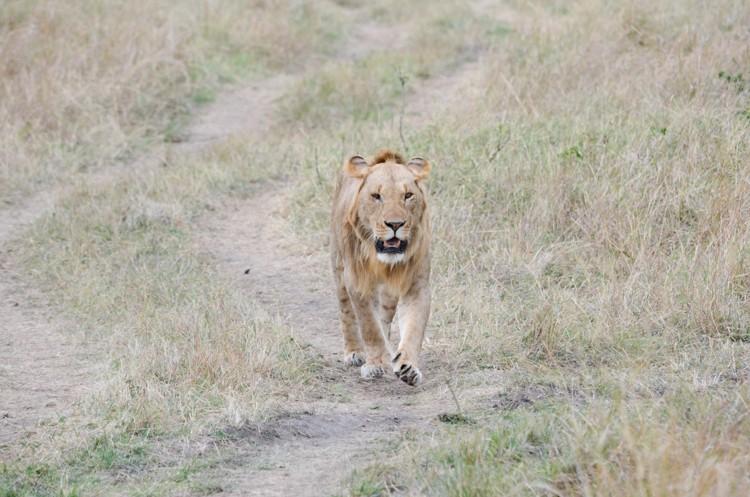 マサイマラの動物たち-20