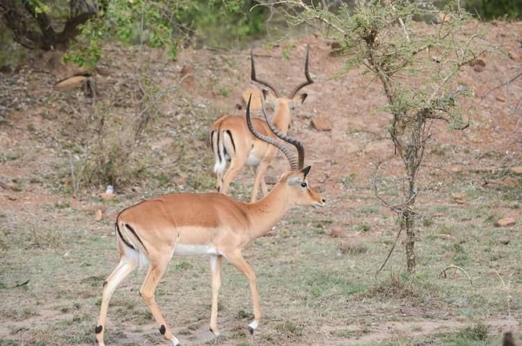 マサイマラの動物たち-6