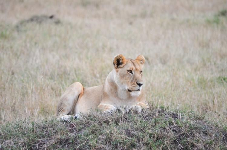 マサイマラの動物たち-22