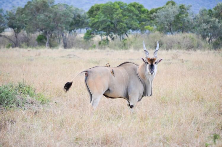 マサイマラの動物たち-23