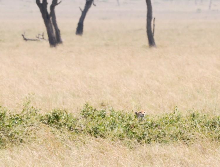 マサイマラの動物たち-35