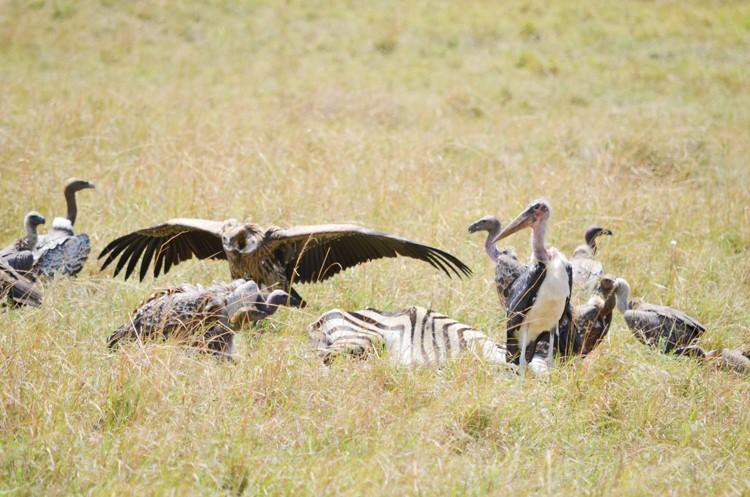 マサイマラの動物たち-32