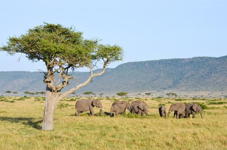 アフリカゾウの群れ-4