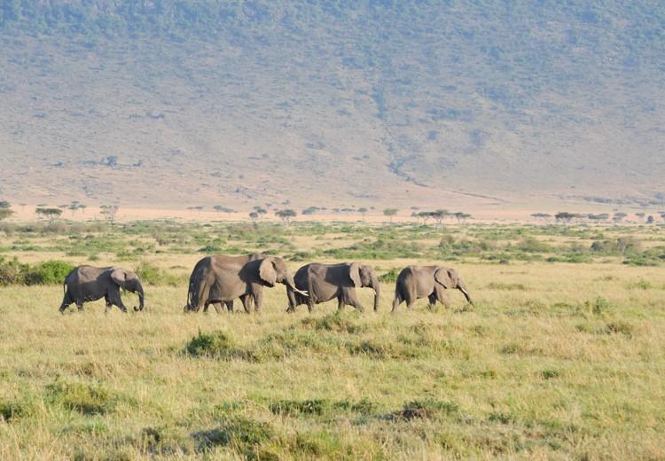 アフリカゾウの群れ-1