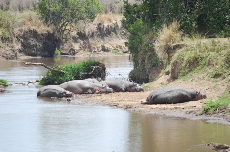 マサイマラの動物たち-37