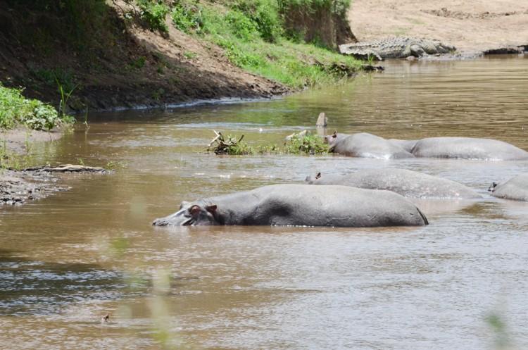 マサイマラの動物たち-36