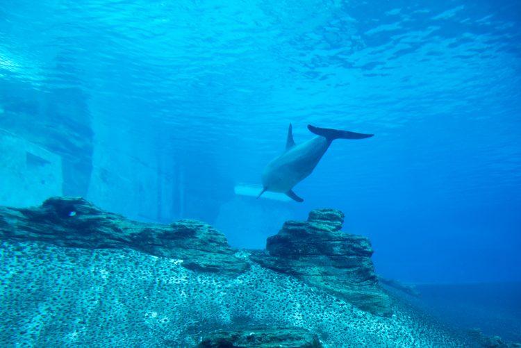 イルカ@S.E.A. Aquarium-1