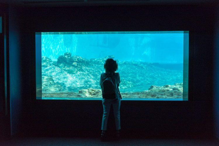 イルカ@S.E.A. Aquarium-2
