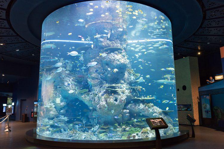 Coral Garden@S.E.A. Aquarium