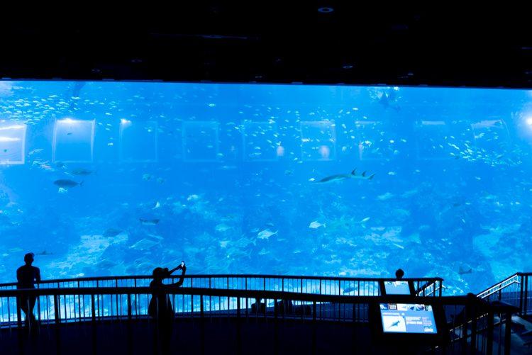 Open Ocean@S.E.A. Aquarium-1