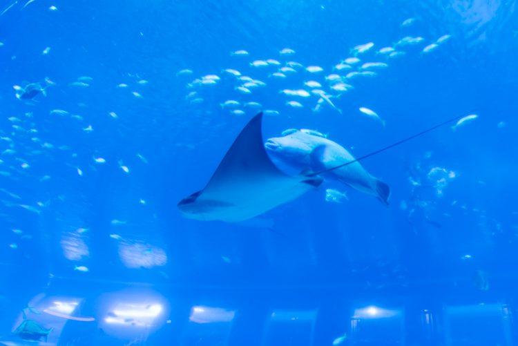 Open Ocean@S.E.A. Aquarium-3