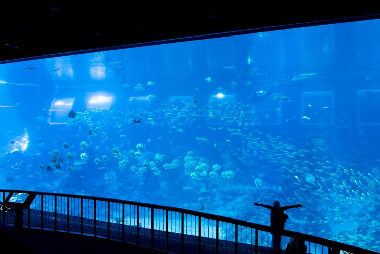 Open Ocean@S.E.A. Aquarium-2